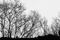 圖片描述:張庭寧〈冬〉